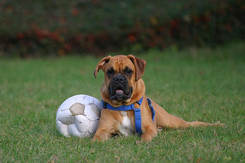 Titus mit Ball
